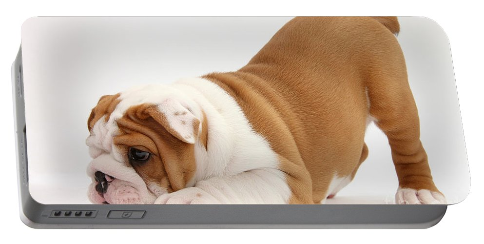 Dog Portable Battery Charger featuring the photograph Playful Bulldog Pup by Mark Taylor