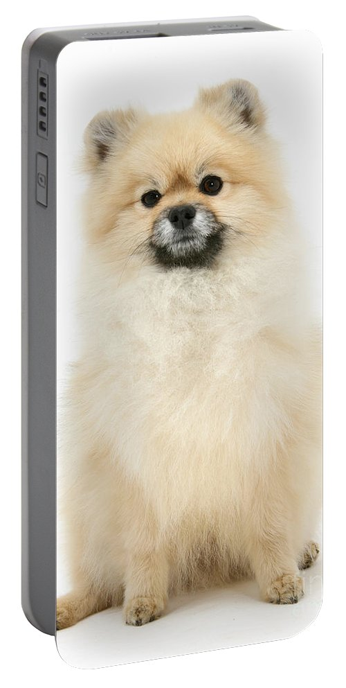 Animal Portable Battery Charger featuring the photograph Pomeranian Dog by Mark Taylor