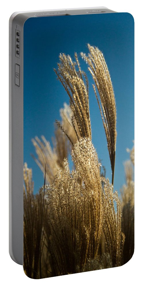 Cortaderia Portable Battery Charger featuring the photograph Pompas Grass 1 by Douglas Barnett