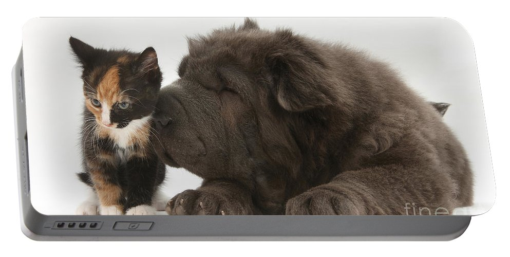 Dog Portable Battery Charger featuring the photograph Pup & Kitten Making Friends by Mark Taylor