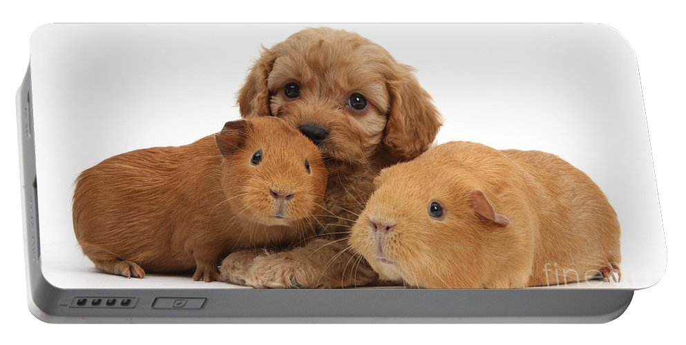 Animal Portable Battery Charger featuring the photograph Puppy And Guinea Pigs by Mark Taylor