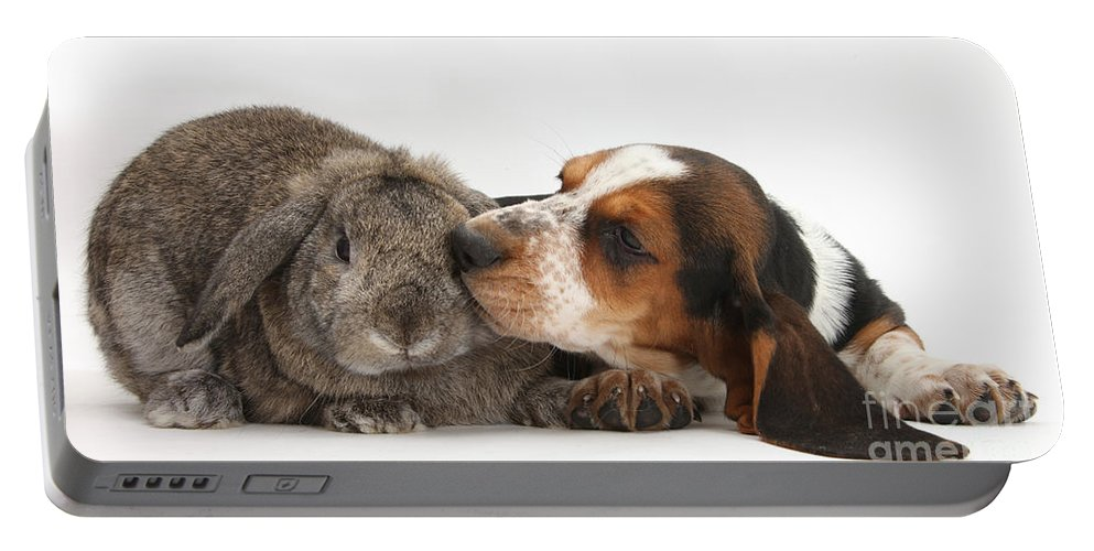 Animal Portable Battery Charger featuring the photograph Puppy And Rabbt by Mark Taylor