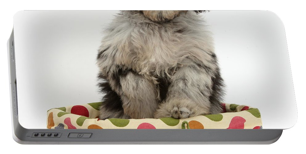 Nature Portable Battery Charger featuring the photograph Puppy In A Basket by Mark Taylor