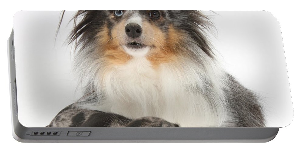 Dog Portable Battery Charger featuring the photograph Puppy Pals by Mark Taylor