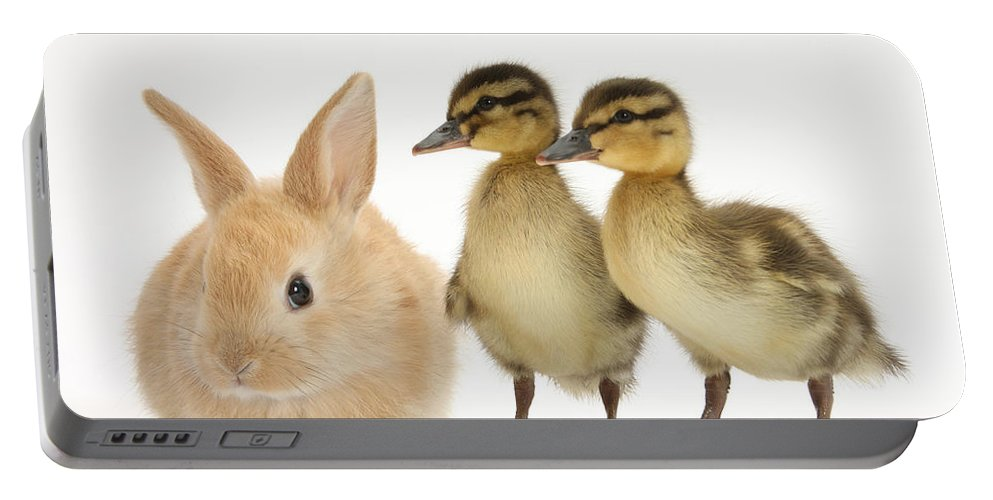 Animal Portable Battery Charger featuring the photograph Rabbit And Ducklings by Mark Taylor