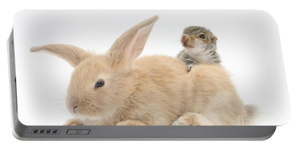 Nature Portable Battery Charger featuring the photograph Rabbit And Squirrel by Mark Taylor