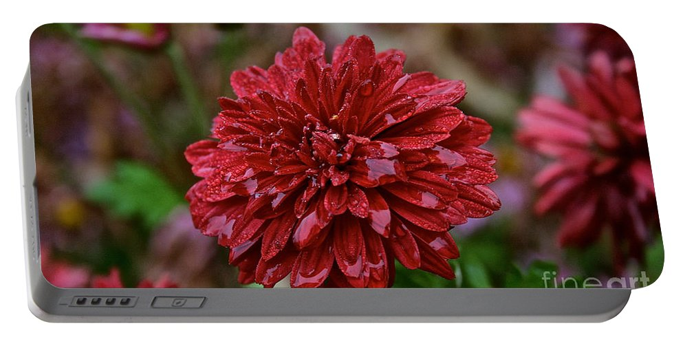 Flower Portable Battery Charger featuring the photograph Red Petals by Susan Herber