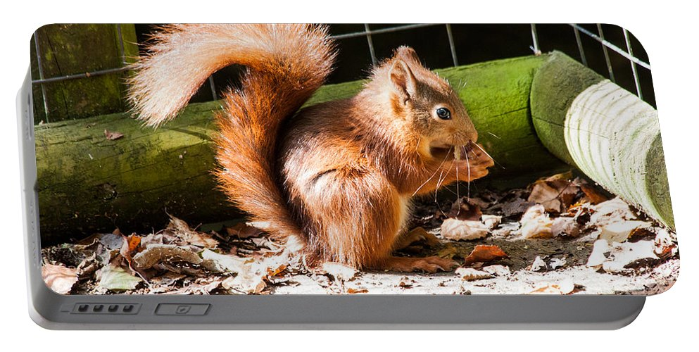 Red Squirrel Portable Battery Charger featuring the photograph Red Squirrel by Dawn OConnor