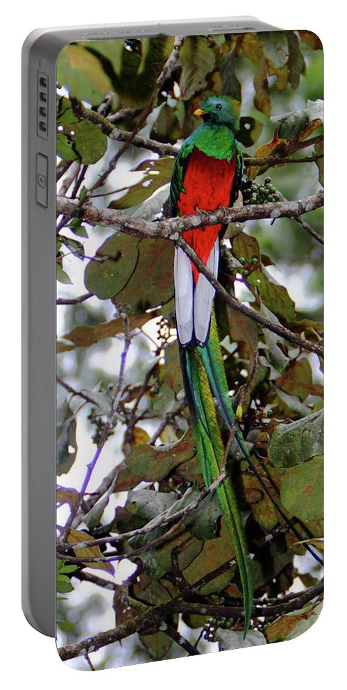 Quetzal Portable Battery Charger featuring the photograph Resplendent Quetzal by Bruce J Robinson
