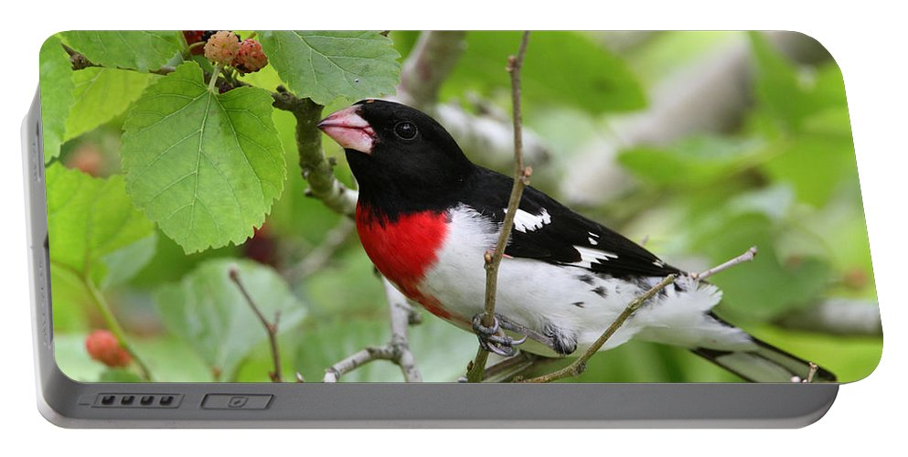 Doug Lloyd Portable Battery Charger featuring the photograph Rose-breasted Grosbeak by Doug Lloyd