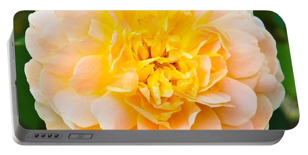 Beautiful Portable Battery Charger featuring the photograph Rose by Tom Gowanlock