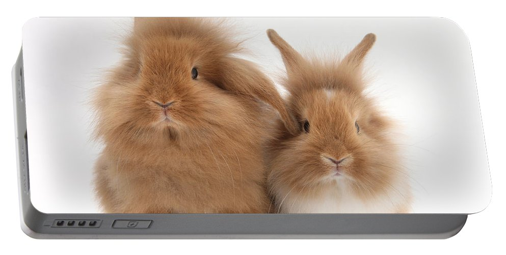 Animal Portable Battery Charger featuring the photograph Sandy Lionhead Rabbits by Mark Taylor