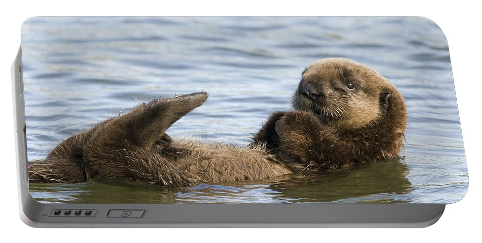 00429677 Portable Battery Charger featuring the photograph Sea Otter Pup Elkhorn Slough Monterey by Sebastian Kennerknecht