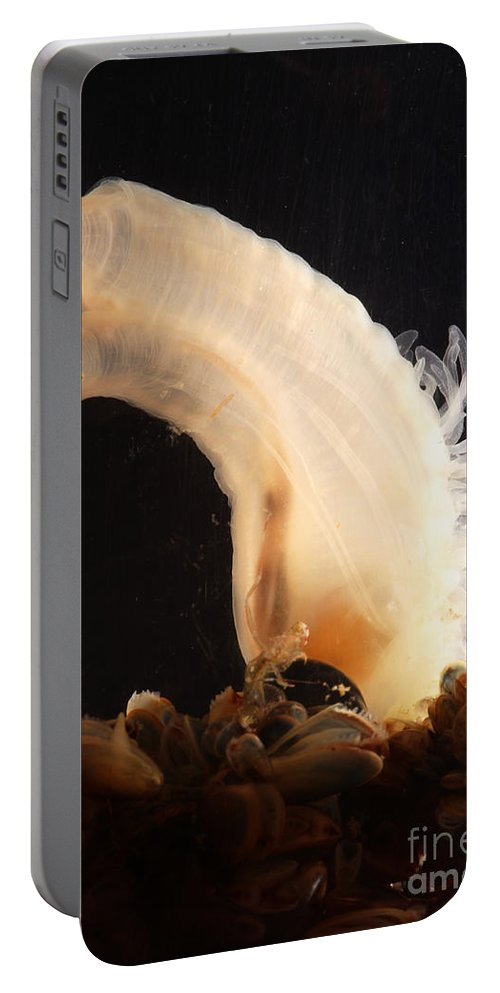 Sea Vase Portable Battery Charger featuring the photograph Sea Vase by Ted Kinsman