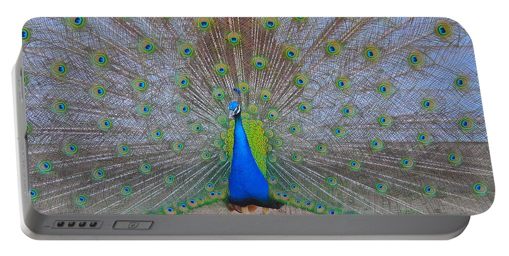 Peacock Portable Battery Charger featuring the photograph Show Off by Bridgette Gomes
