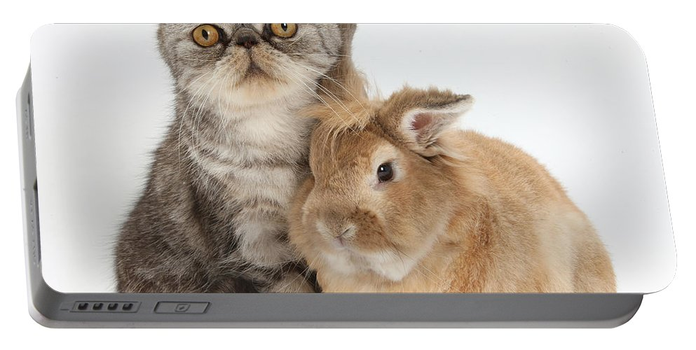 Nature Portable Battery Charger featuring the photograph Silver Tabby Cat And Lionhead-cross by Mark Taylor