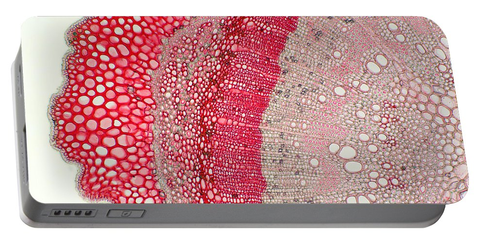 Science Portable Battery Charger featuring the photograph Silver Wattle Stem by Ted Kinsman