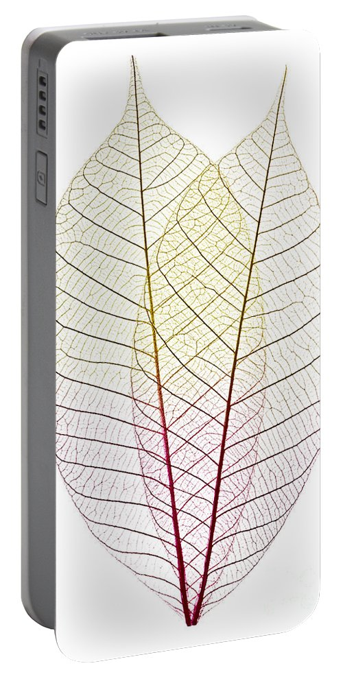 Skeleton Portable Battery Charger featuring the photograph Skeleton Leaves by Elena Elisseeva