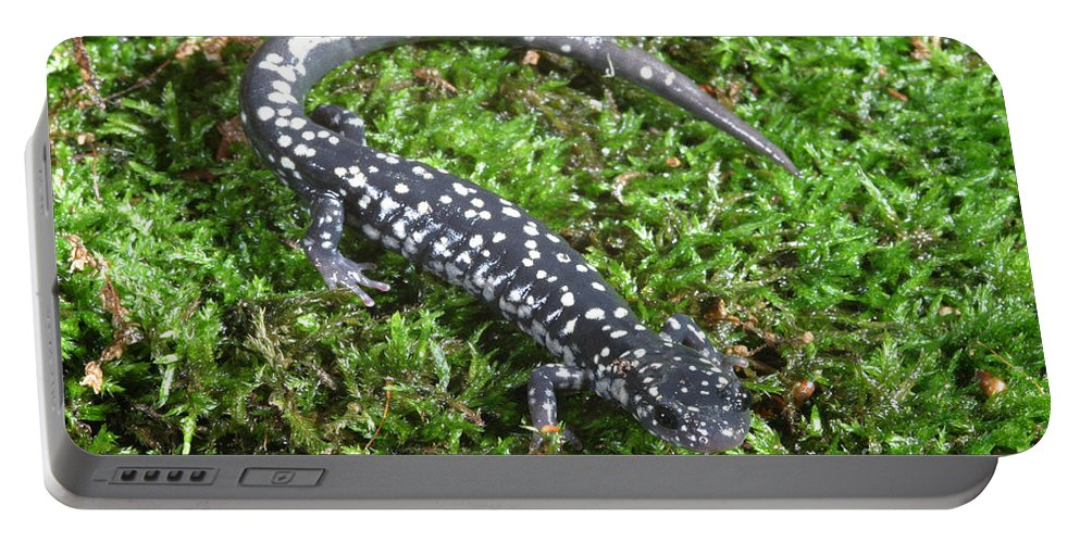 Animal Portable Battery Charger featuring the photograph Slimy Salamander by Ted Kinsman