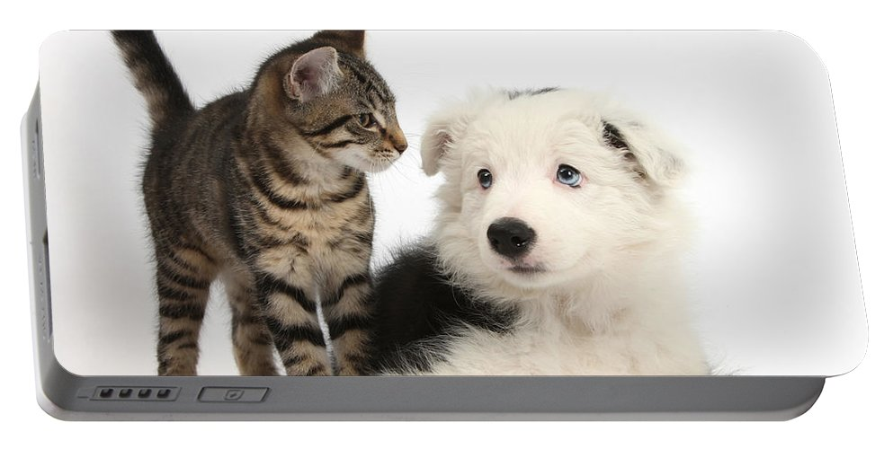 Animal Portable Battery Charger featuring the photograph Tabby Kitten & Border Collie by Mark Taylor