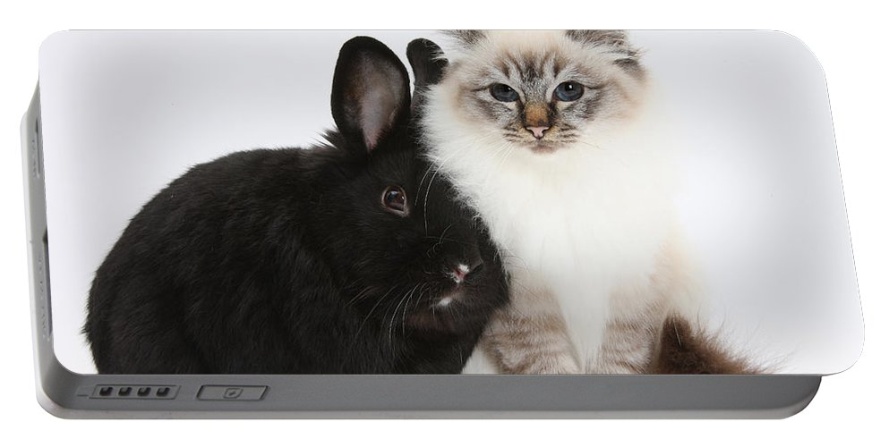 Nature Portable Battery Charger featuring the photograph Tabby-point Birman Cat And Black Rabbit by Mark Taylor