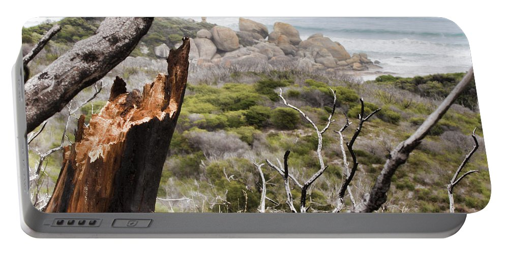 Tree Portable Battery Charger featuring the photograph The Death Of A Tree V2 by Douglas Barnard