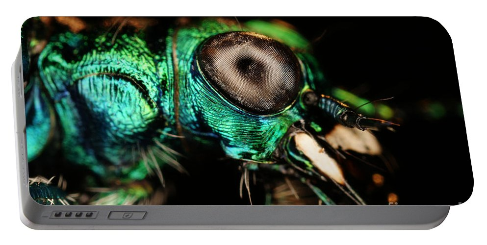 Tiger Beetle Portable Battery Charger featuring the photograph Tiger Beetle by Ted Kinsman