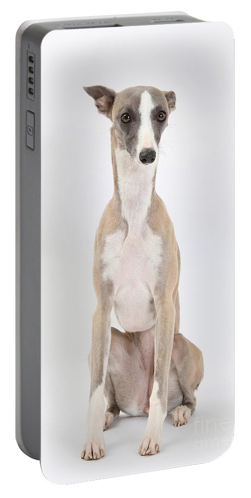 Dog Portable Battery Charger featuring the photograph Whippet by Mark Taylor
