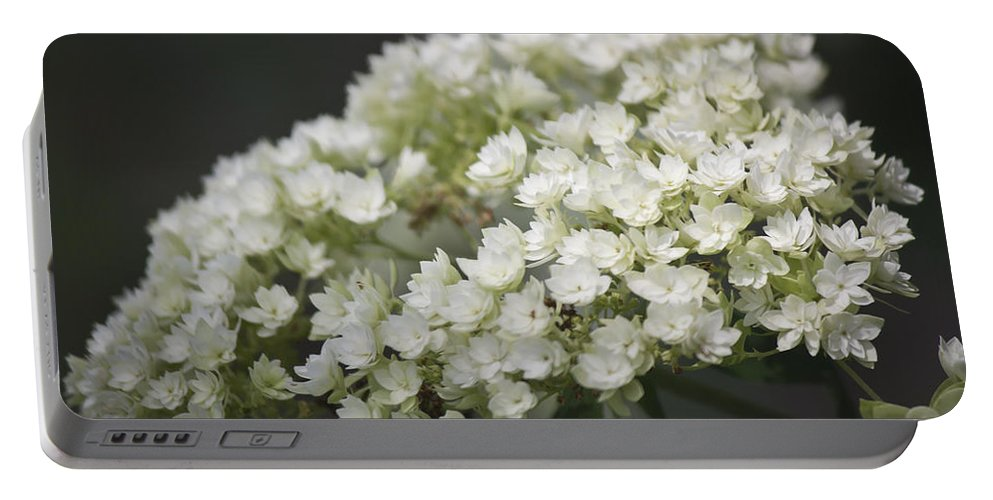 Hydrangea Portable Battery Charger featuring the photograph White Hydrangea Bloom by Teresa Mucha