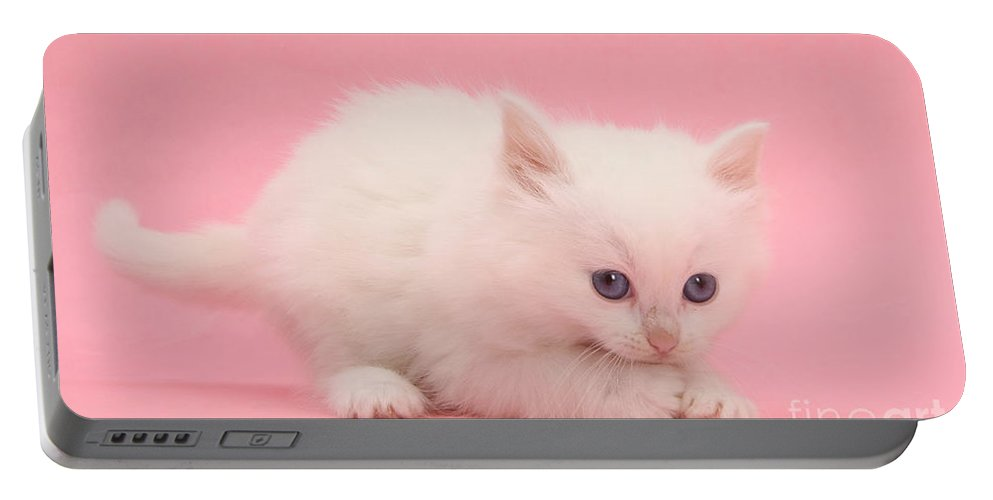 Animal Portable Battery Charger featuring the photograph White Kitten by Mark Taylor