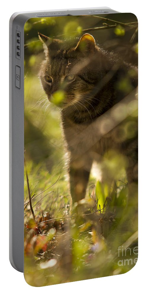 Cat Portable Battery Charger featuring the photograph Wonky Eyed Tiger by Angel Ciesniarska