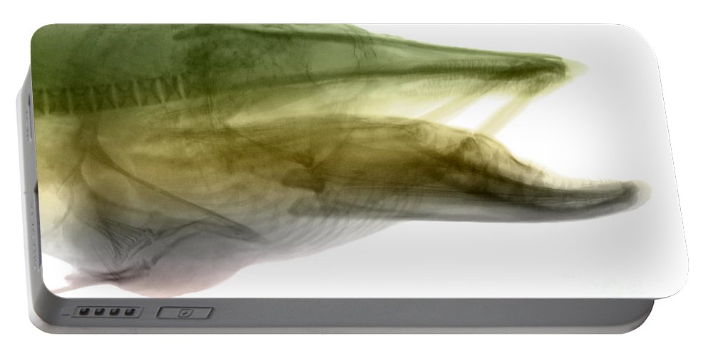 Xray Portable Battery Charger featuring the photograph X-ray Of Muskie by Ted Kinsman