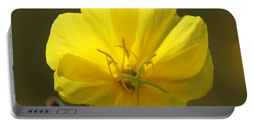 Yellow Portable Battery Charger featuring the photograph Yellow Wild Flower by Chris Day