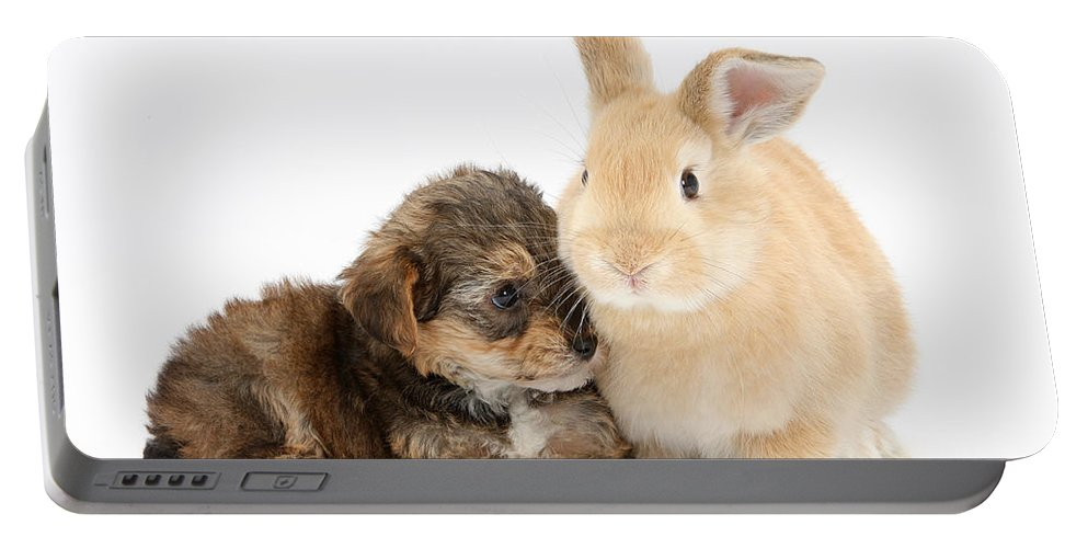Nature Portable Battery Charger featuring the photograph Yorkipoo Pup With Sandy Rabbit by Mark Taylor