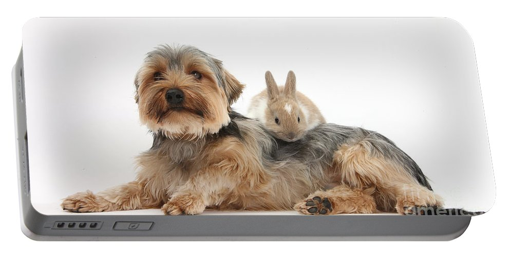 Nature Portable Battery Charger featuring the photograph Yorkshire Terrier Dog And Baby Rabbit by Mark Taylor