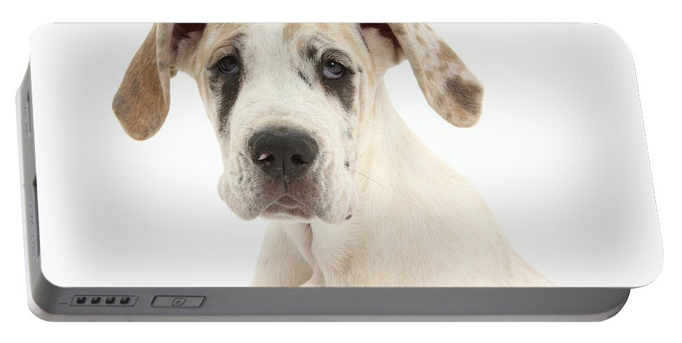 Nature Portable Battery Charger featuring the photograph Great Dane Pup by Mark Taylor