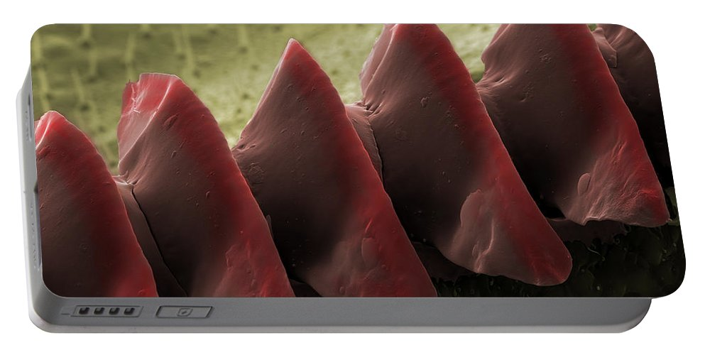 Field Cricket Portable Battery Charger featuring the photograph Cricket Sound Comb, Sem by Ted Kinsman