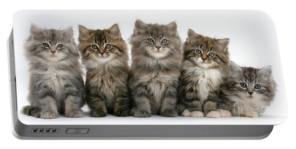 Animal Portable Battery Charger featuring the photograph Maine Coon Kittens by Mark Taylor