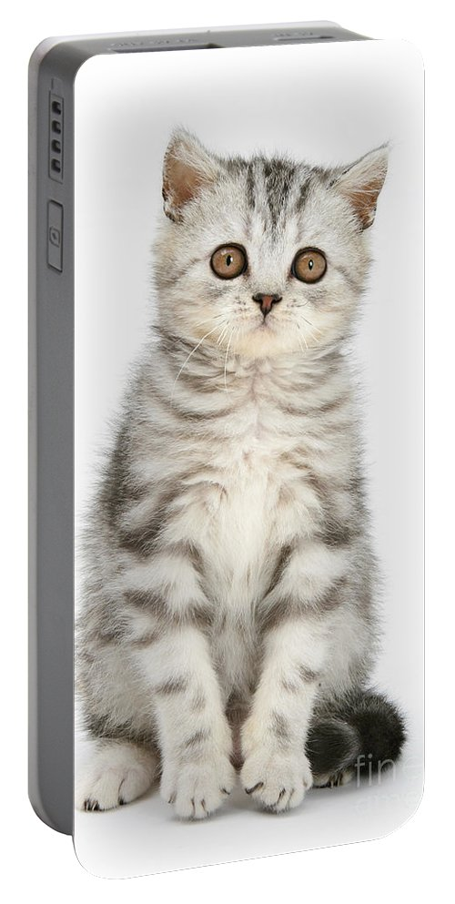 Animal Portable Battery Charger featuring the photograph Tabby Kitten by Mark Taylor