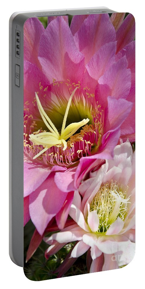 Pink Portable Battery Charger featuring the photograph Pink Cactus Flowers by Jim And Emily Bush