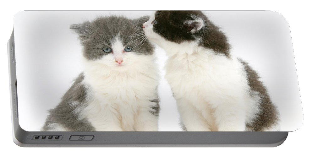 Animal Portable Battery Charger featuring the photograph Kittens by Mark Taylor