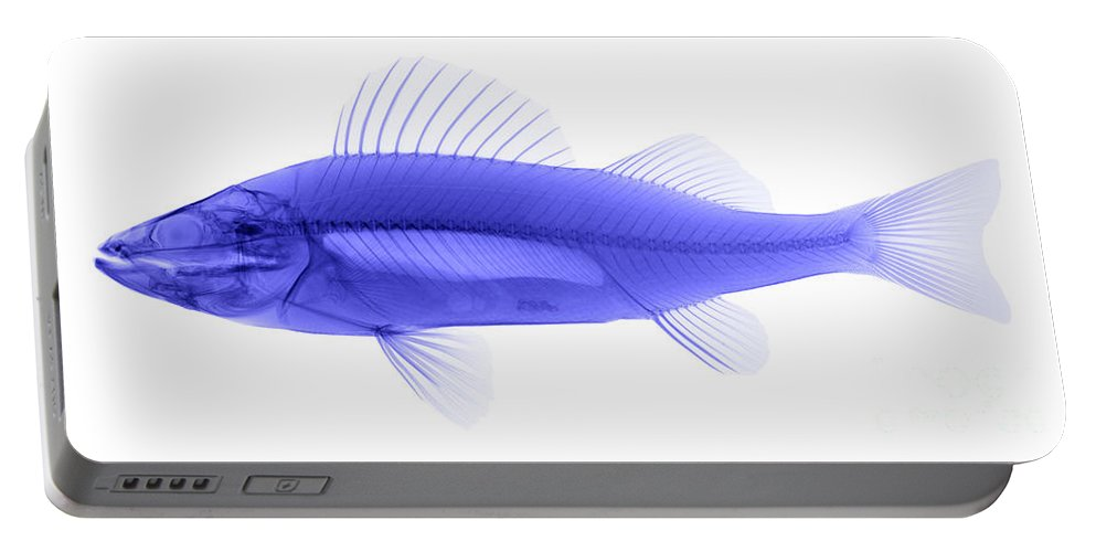 Xray Portable Battery Charger featuring the photograph An X-ray Of Yellow Perch by Ted Kinsman