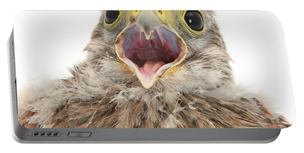Nature Portable Battery Charger featuring the photograph Baby Kestrel by Mark Taylor