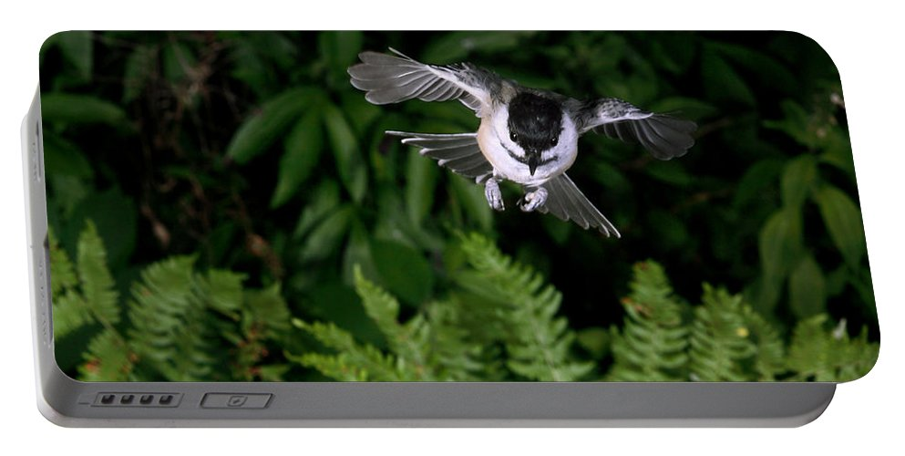 Black-capped Chickadee Portable Battery Charger featuring the photograph Black-capped Chickadee In Flight by Ted Kinsman