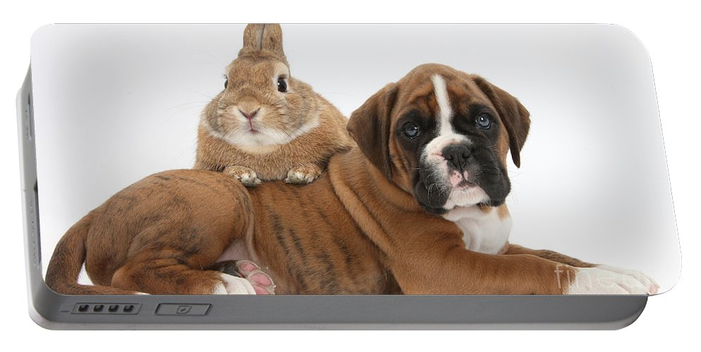 Boxer Portable Battery Charger featuring the photograph Boxer Puppy And Netherland-cross Rabbit by Mark Taylor