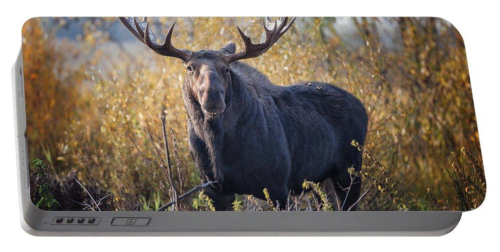 2012 Portable Battery Charger featuring the photograph Bull Moose by Ronald Lutz