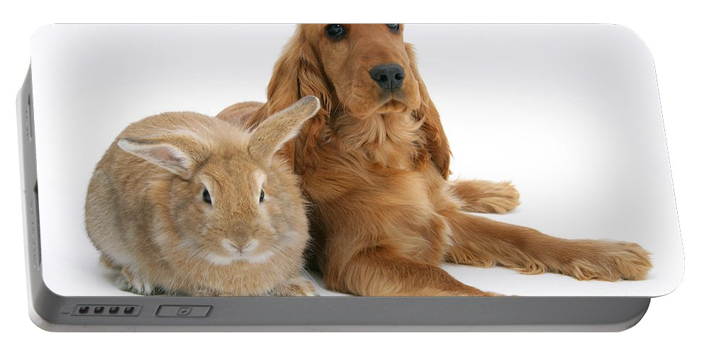 Animal Portable Battery Charger featuring the photograph Cocker Spaniel And Rabbit by Mark Taylor