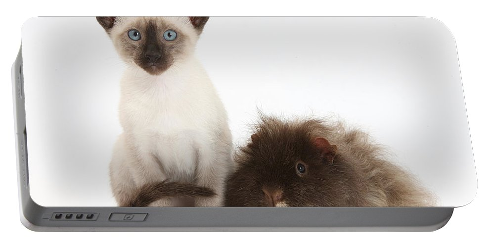 Nature Portable Battery Charger featuring the photograph Colorpoint Rabbit And Siamese Kitten by Mark Taylor