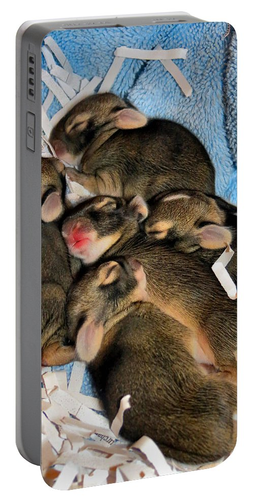 Bunny Portable Battery Charger featuring the photograph Family by Art Dingo