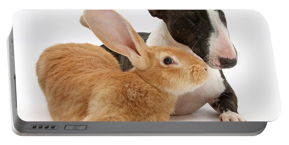 Nature Portable Battery Charger featuring the photograph Flemish Giant Rabbit And Miniature Bull by Mark Taylor